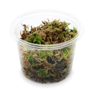(観葉植物)苔 カップ売り 国産 生ミズゴケ(生水苔) (1カップ)