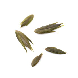 (ビオトープ)越冬芽 マルバオモダカ(5粒)