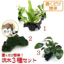 (水草)置くだけ簡単 水草付き流木3種セット(ミクロ・アヌビアス・モス)
