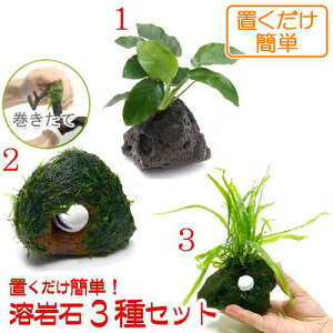(水草)置くだけ簡単 水草付き溶岩石3種セット