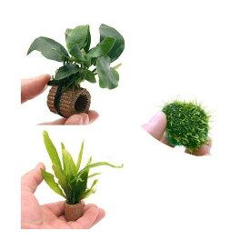 (水草)置くだけ簡単 水草 3種セット