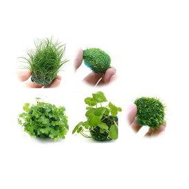 (水草)置くだけ簡単 水草ボール(無農薬)5種セット