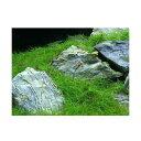 (水草)30cm水槽用 草原風レイアウト(ヘアーグラスショート&風山石) 素材セット 熱帯魚 本州四国限定