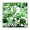 (水草)おまかせ水上葉 3種セット(計10本) + 巻きたて ウィローモスボール(無農薬)(1個)