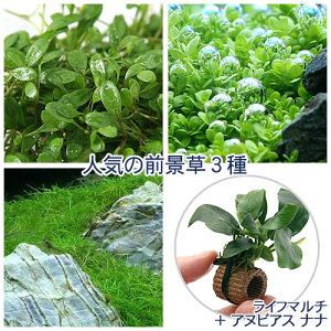 (水草)人気の前景草3種セット+ライフマルチ(茶)アヌビアスナナ