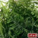 (水草)ウィローモス ミックス(無農薬)(1パック)
