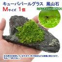 (エビ 水草)ミナミヌマエビ(10匹)+キューバパールグラス 風山石 Mサイズ(無農薬)(1個)