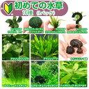 (水草)初めての水草 10種(1パック)説明書付 熱帯魚