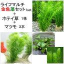 (水草)ライフマルチ(茶) メダカ・金魚藻(1セット)+ホテイ草(1株)+マツモ(3本) 本州四国限定
