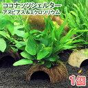 (水草)ココナッツシェルター アヌビアスナナ&ミクロソリウムプテロプス(1個)