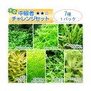 (水草 熱帯魚)中級者チャレンジセット 2500円 7種(1パック)
