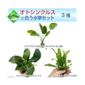 (水草)オトシンクルスに合う水草セット 3種(1セット)(説明書付)