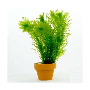 (水草)メダカ・金魚藻 国産 無農薬アナカリス ミニ素焼き鉢(3鉢)