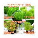 (水草)マルチリングブラック(黒) メダカ・金魚藻 (1セット)