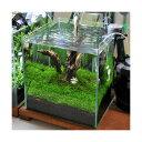 (水草 熱帯魚)初めての流木レイアウトセット 30cmキューブ水槽用(水草・流木のみ) 本州四国限定