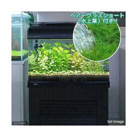 (水草)おまかせ水上葉 レイアウトセット 60cm水槽用 8種 +ヘアーグラスショート(無農薬)(水草説明書付)