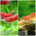 (エビ)チェリーシュリンプ ハーフ&ハーフ ver.朱&紅(各5匹)北海道航空便要保温