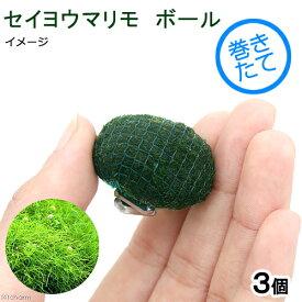 (水草)巻きたて セイヨウマリモボール(無農薬)(3個) 北海道航空便要保温