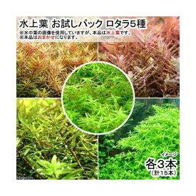 (水草)水上葉 お試しパック ロタラ5種 各3本(無農薬)(計15本)(1パック分)