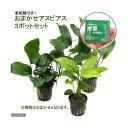 (水草)おまかせアヌビアス 3種セット(計3ポット分)+水草その前に 1g(2L用) 本州・四国限定