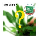 (水草 熱帯魚)おまかせクリプトコリネ(10ポット分)+水草その前に 1g(2L用) 本州・四国限定