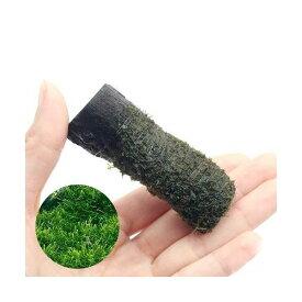 (水草)巻きたて ウィローモス カット流木 ミニサイズ(8cm以下)(無農薬)(5本)
