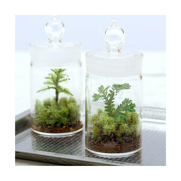 (観葉植物)苔Terrarium クラマゴケ ガラスボトルミニ 説明書付 テラリウムキット 本州・四国限定