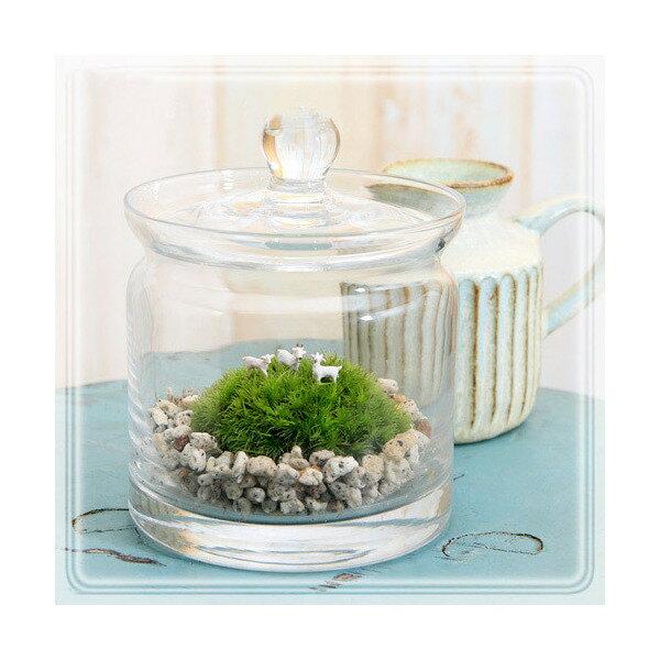 (観葉植物)苔Terrarium 小さな牧場 ヤギ ガラスポットS 説明書付 本州・四国限定