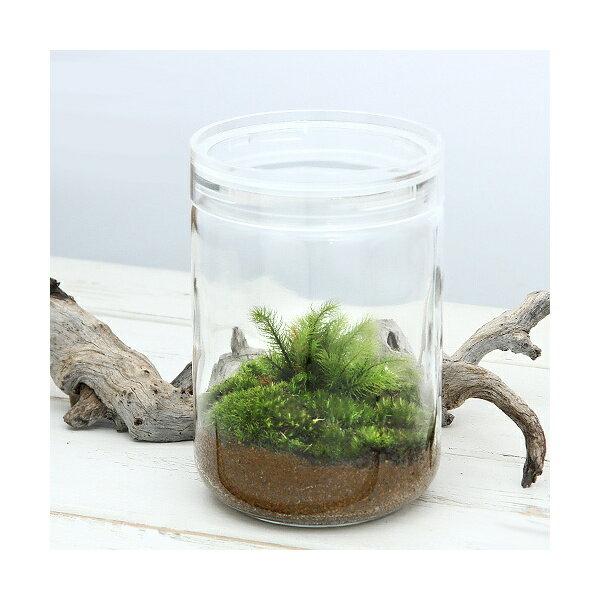 (観葉植物)苔Terrarium ヒノキゴケ ガラスボトルL 説明書付 テラリウムキット 本州・四国限定