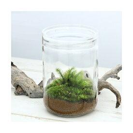 (観葉植物)苔Terrarium ヒノキゴケ ガラスボトルL 説明書付 テラリウムキット 本州四国限定