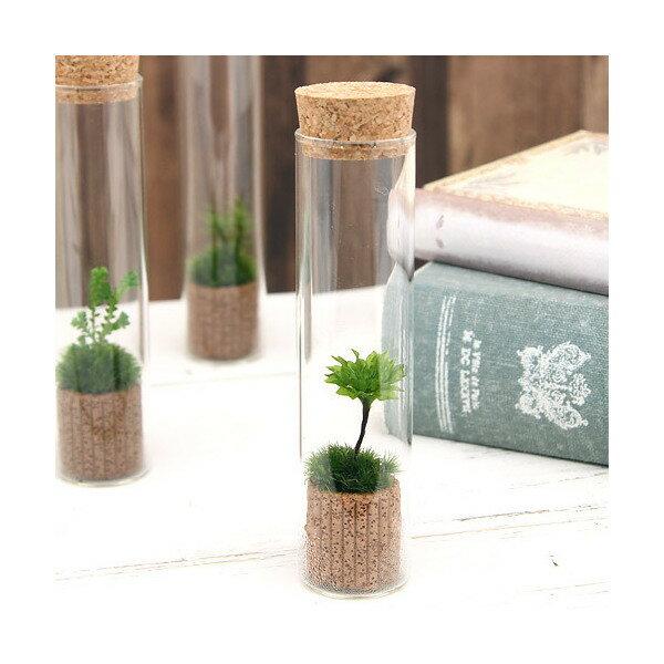 (観葉植物)苔Terrarium オオカサゴケ スリムガラス 説明書付 テラリウムキット