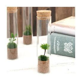 (観葉植物)苔Terrarium オオカサゴケ スリムガラス 説明書付