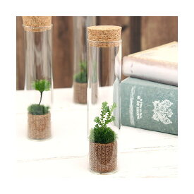 (観葉植物)苔Terrarium クラマゴケ スリムガラス 説明書付