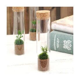 (観葉植物)苔Terrarium シッポゴケ スリムガラス 説明書付