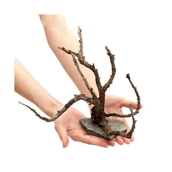 形状おまかせ 枝状 レイアウト流木 (1個) 関東当日便