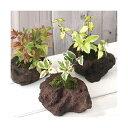 (観葉)苔盆栽 おまかせ山野草 溶岩石鉢植え(3鉢)