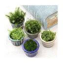 (盆栽)苔盆栽 おまかせ苔 豆鉢植え(10鉢)