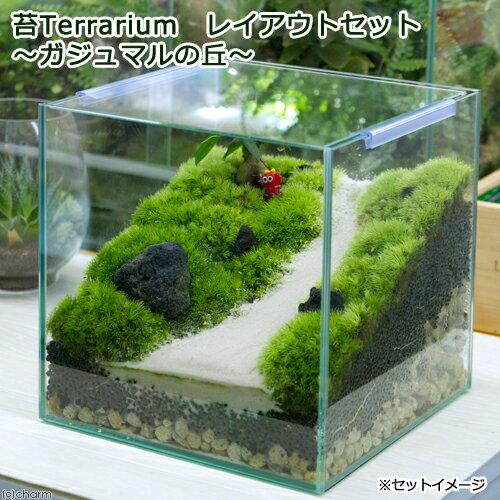 (観葉植物)苔Terrarium レイアウトセット 〜ガジュマルの丘〜 説明書付 沖縄別途送料