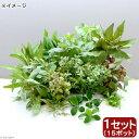 (水草)おまかせ水草ミニポット レイアウトセット(水上葉)(1セット)(無農薬)