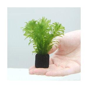 (水草)メダカ・金魚藻 国産 マルチリングブラック(黒) アナカリス ミニ(無農薬)(1個)