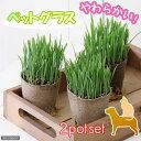 (観葉植物)猫草 ネコちゃん人気No.1(ペットグラス) 直径8cmECOポット植え(無農薬)(2ポットセット) 猫草 …