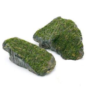 (水草)巻きたて ジャイアント南米ウィローモス 風山石 Sサイズ(約10cm)(無農薬)(3個)