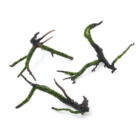 (水草)巻きたて モス付き枝状流木(ウィローモスsp.)Sサイズ(約10cm〜)(無農薬)(1本)