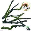 (水草)巻きたて ウィローモス 枝状流木 Mサイズ(約20cm〜)(無農薬)(3本)