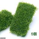 (水草)南米ウィローモスマット(無農薬)(5個) 沖縄別途送料