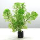 (水草)メダカ・金魚藻 マルチリング・ブラック(黒) カボンバ(2個)