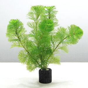 (水草)メダカ・金魚藻 マルチリングブラック(黒) カボンバ(2個)