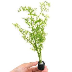 (水草)マルチリングブラック(黒) ベトナム産スプライト(水上葉)(無農薬)(1個)