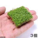 (水草)キューバパールグラス(水上葉) キューブタイプLサイズ(約4cm)(無農薬)(3個)
