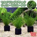 (水草)マルチリング・ブラック(黒) ウィローモスカーテン(無農薬)(1個)